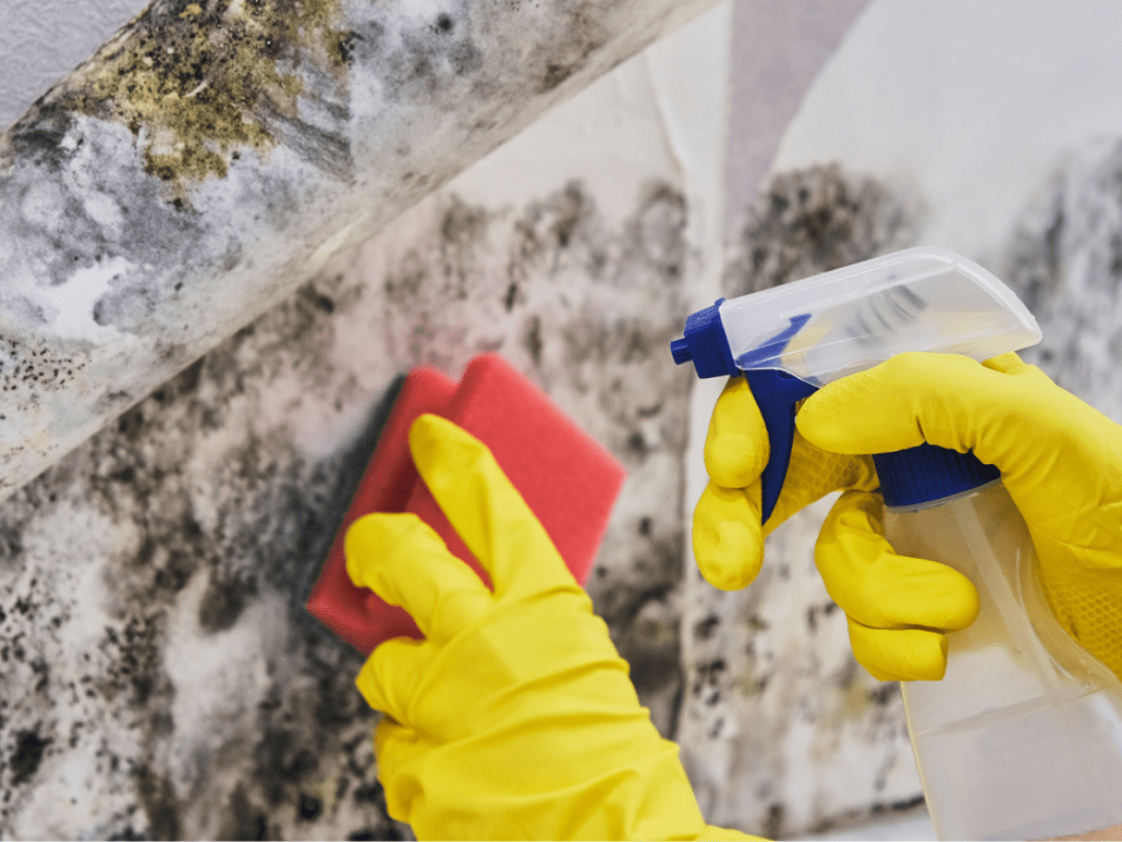 Cleaning up toxic mold after lawsuit settlement reached in Florida