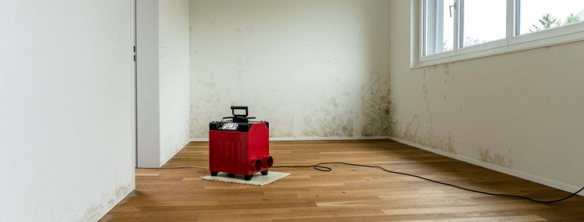 room being cleaned after discovering toxic mold in riverview, florida